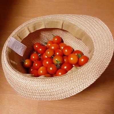 tomato_1080_1080.jpg